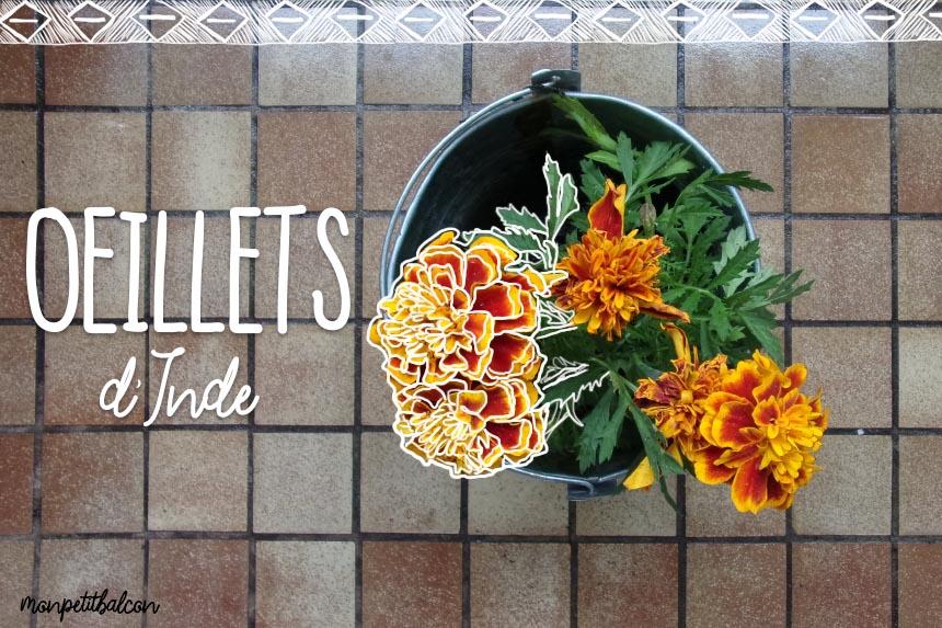 mon petit balcon jardiniers urbains are you radis pour mettre les mains la terre. Black Bedroom Furniture Sets. Home Design Ideas