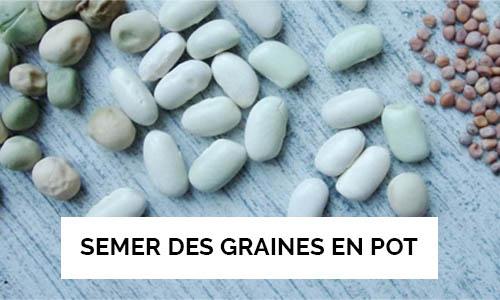 apprendre à semer des graines en pot