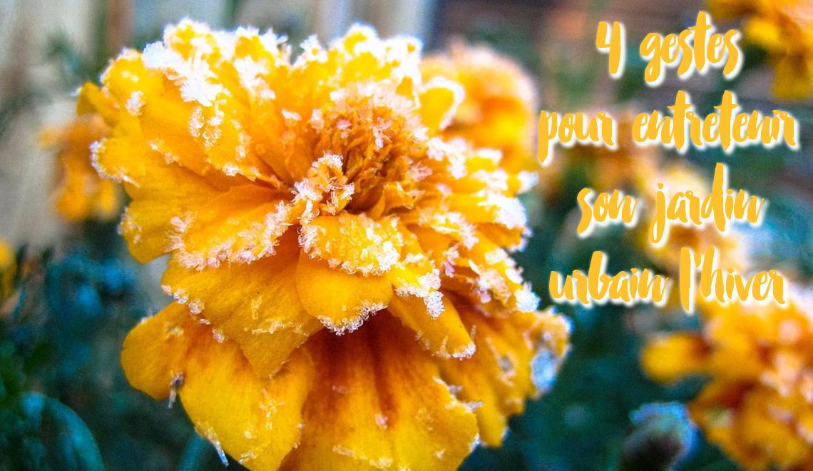 4 gestes pour entretenir son jardin urbain l'hiver